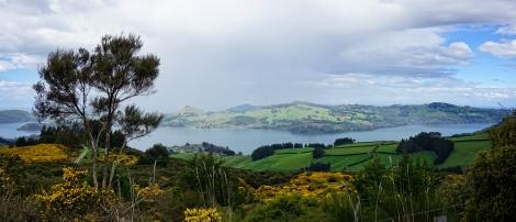 1 Otago Harbour