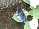 Butterflies Museum