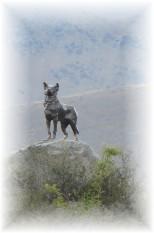 mckenzies-dog2