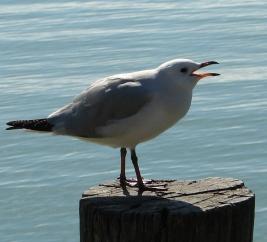 Seabirds 30