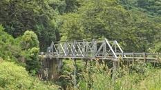 Waihopi River (7)