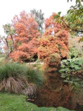 Autumn Oamaru Park 6
