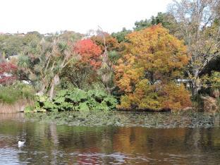 Oamaru Park Autumn (1)