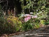 Oamaru Park Autumn (30)