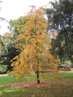 Oamaru Park Autumn (37)