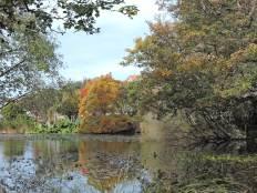 Oamaru Park Autumn (39)